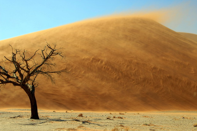 The Moving Dune