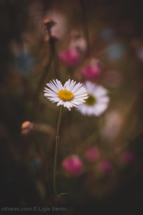 Fotografia em Palavras: Flores