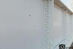 Gunshots on the Bridge