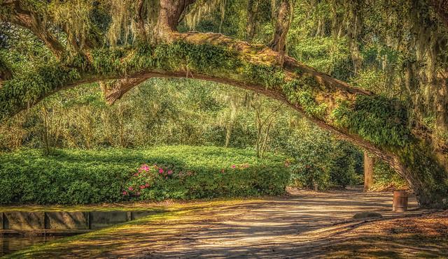 Middleton Plantation Gardens (2870)