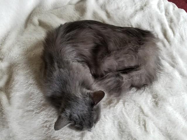 20190429.duster.cat