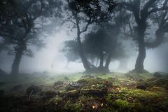 Madeira Island Portugal by Antonio GAUDENCIO