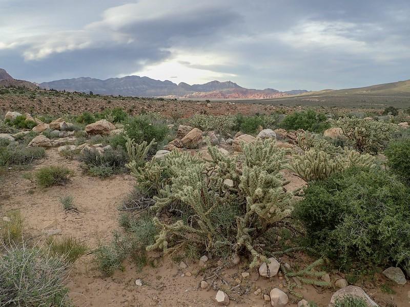 Blick auf Red Rocks.
