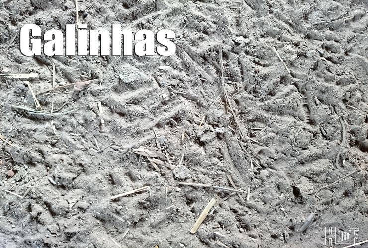 01 DSC_0292 Galinhas Blogue
