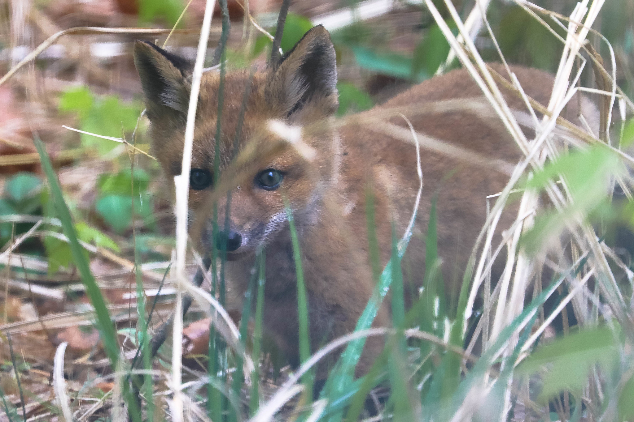 Your Friday Fox Update Is Here, Plus, Y'know, Book News And Stuff