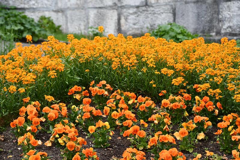 Flowerbed 30.04.2019
