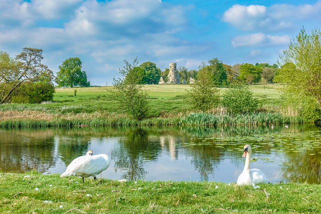Swans and the folly