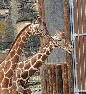 San Antonio Zoo Field Trip