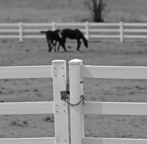 horse farm2