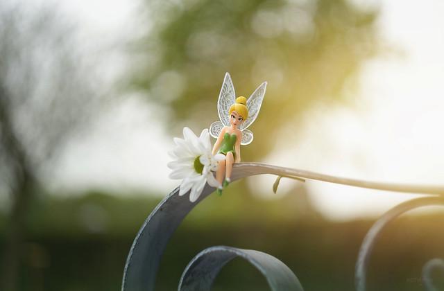 Fairy Day...