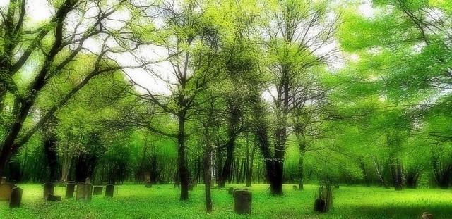 Forêt printanière