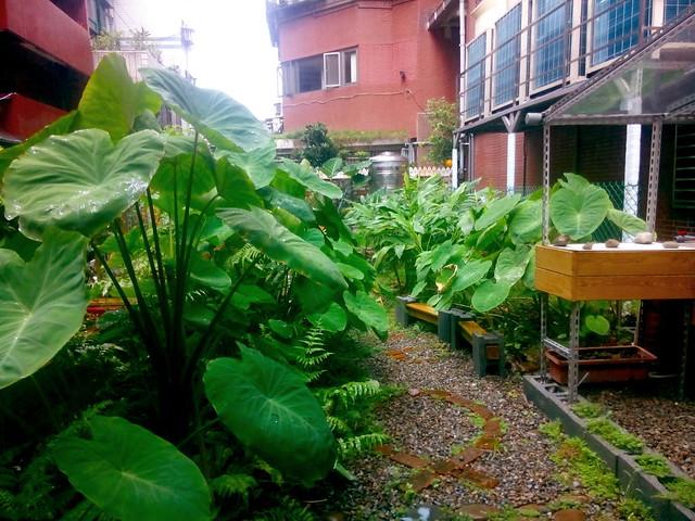 Taipei city micro garden
