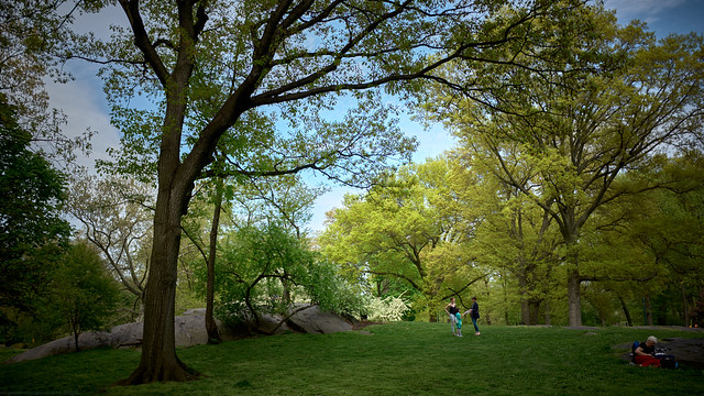 Spring Afternoon - Central Park