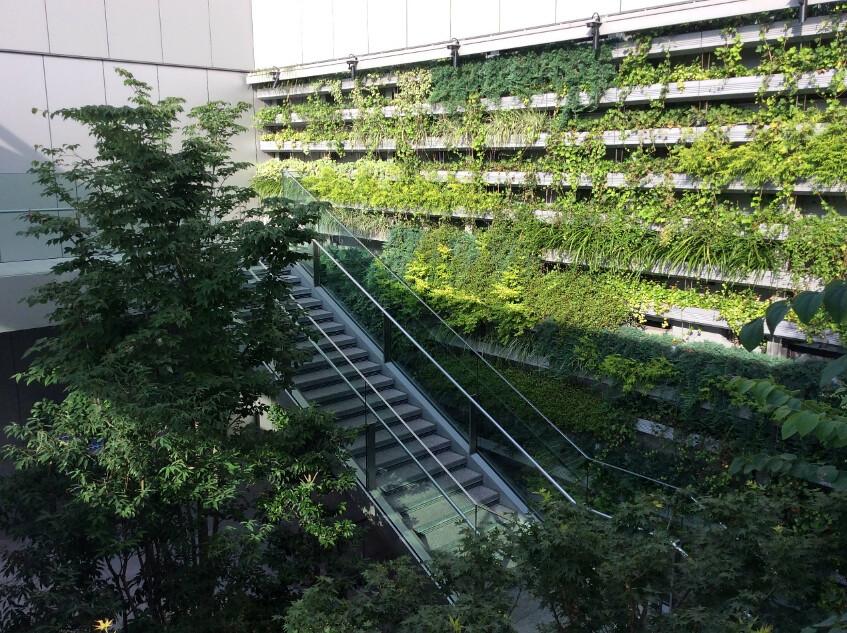 GINZA SIX屋頂花園的垂直綠化,植物相當茂密。