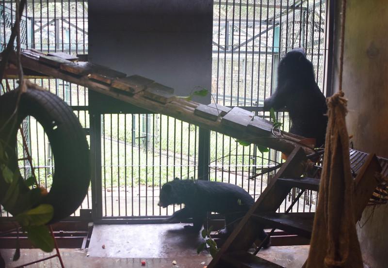 V203 Sugar (ground) and V204 Spice exploring their cub house den