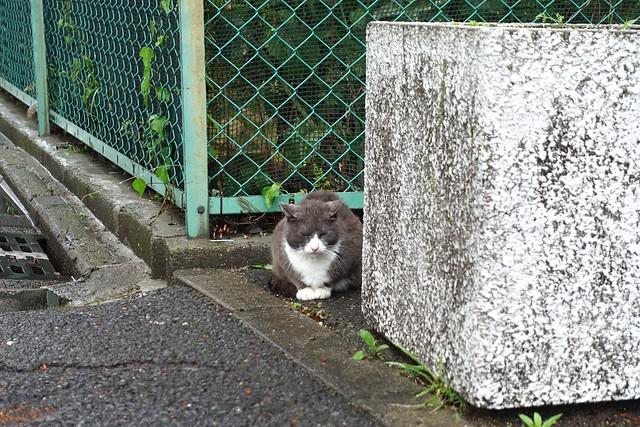 Today's Cat@2019-05-03
