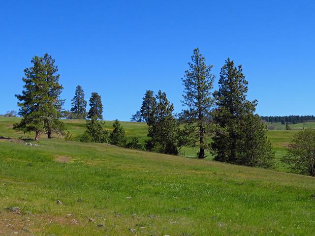 Catherine Creek Trail in WA