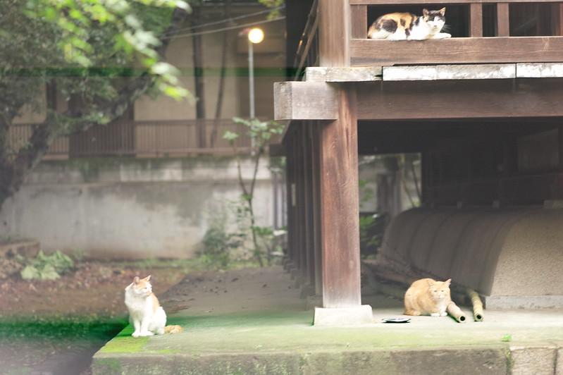33 南池袋法明寺の猫