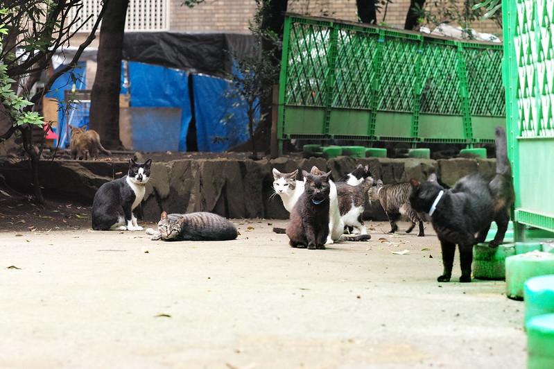 28 東池袋中央公園の猫だまり