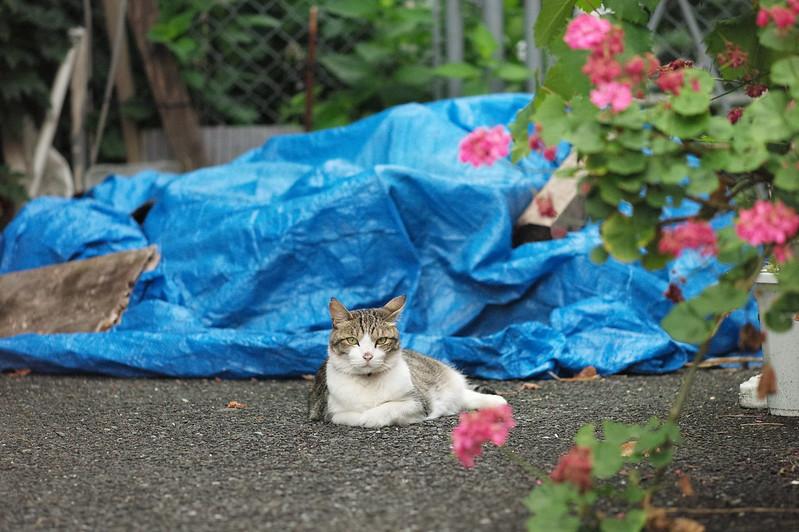 27 上池袋一丁目路地の猫
