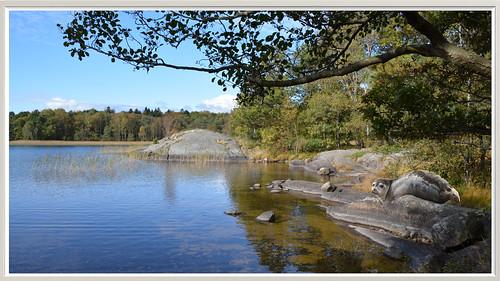 mölnlycke seebaum suède mölndal tree albero del lago della svezia suecia árbol sverige sjö träd sweden lake schweden rocks klippor felsen baum arbre de roches di rocce rocas