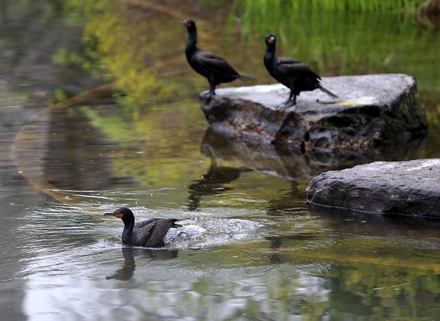 my coven of cormorants