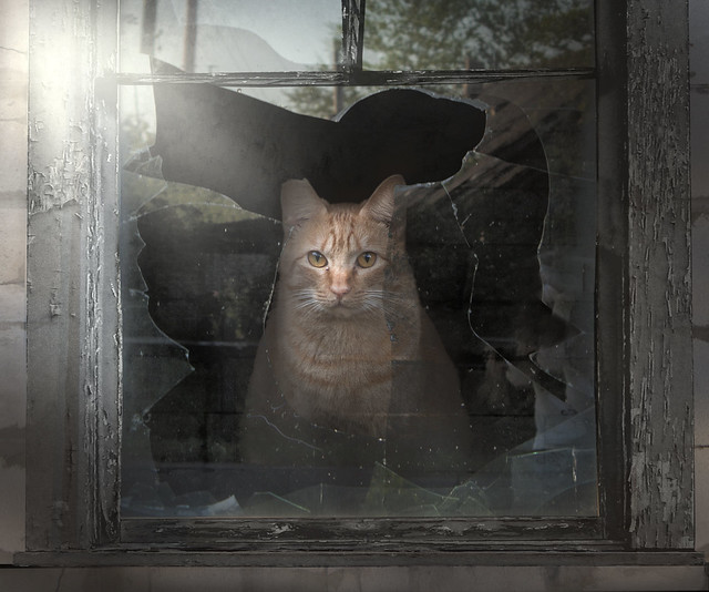 Broken Glass Window Cat