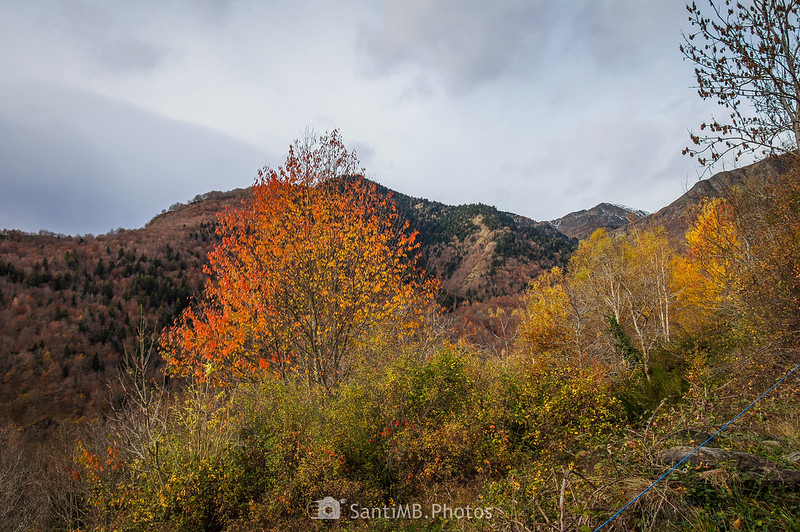 Colores de otoño en las afueras de Bausen