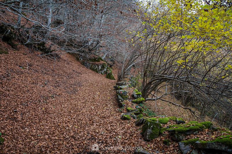 Entrando en el Bosc de Carlac por arriba