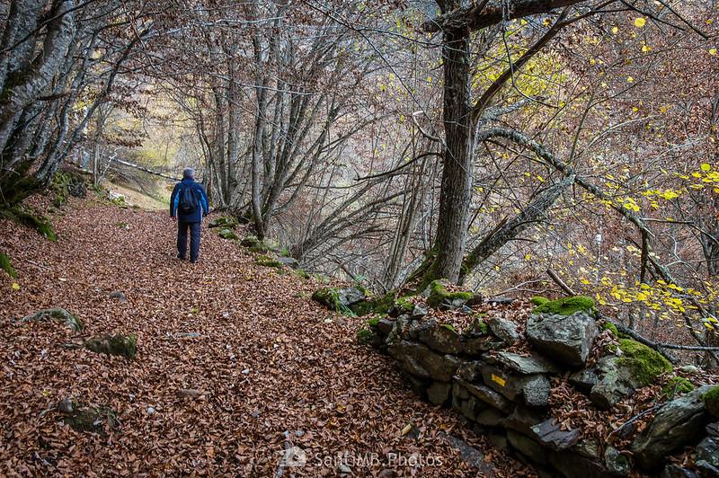 Hombre caminando por el Bosque Encatntado de Carlac