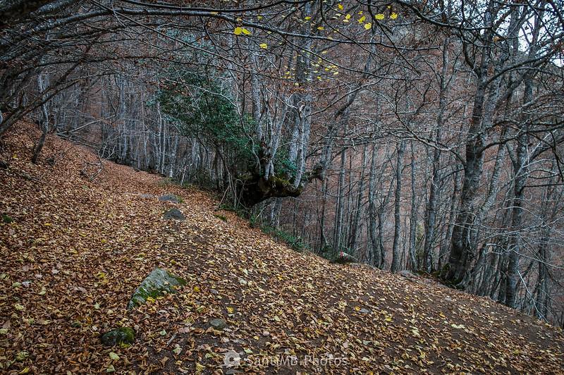 Entrando de nuevo en el Bosque Encantado de Carlac