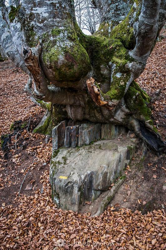Haya apoyada en una piedra en el Bosque Encantado de Carlac