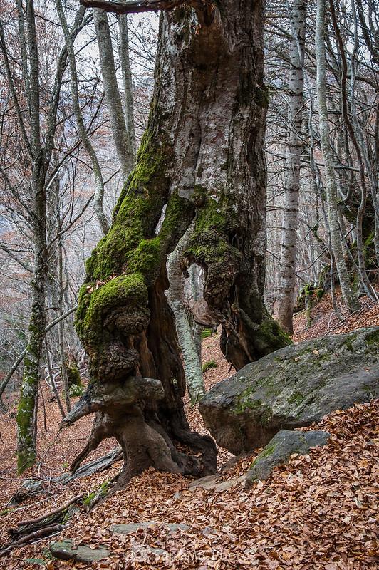 Haya caminando en el Bosque Encantado de Carlac