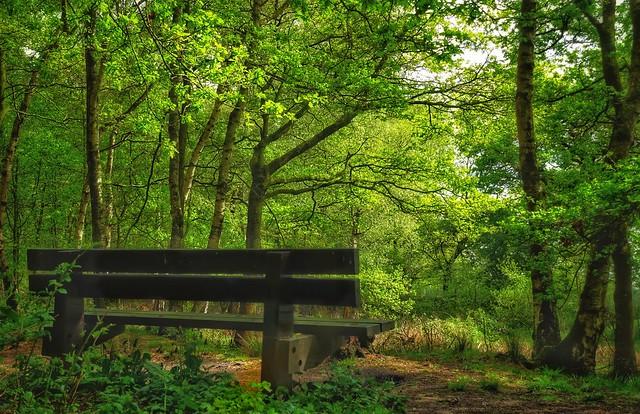 Woodland view, Brereton, Cheshire