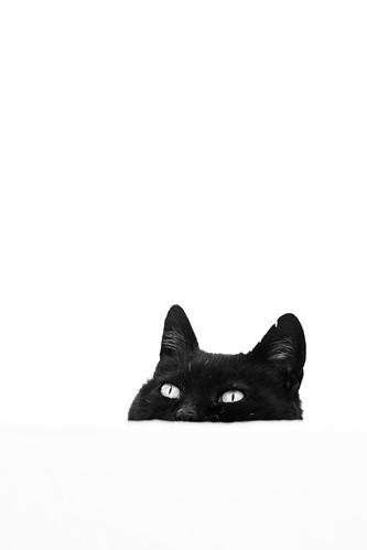 Le chat de Pyrgos, Santorin, Grèce 2019
