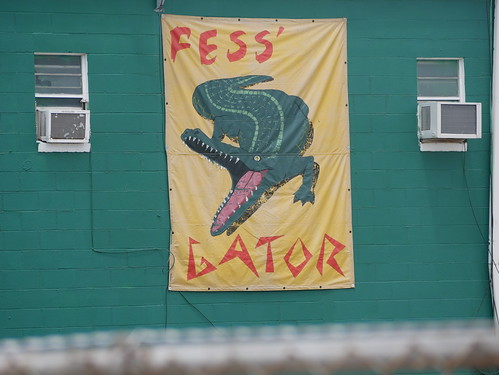 Fess Gator  on Day 8 of Jazz Fest - 5.5.19. Photo by Louis Crispino.