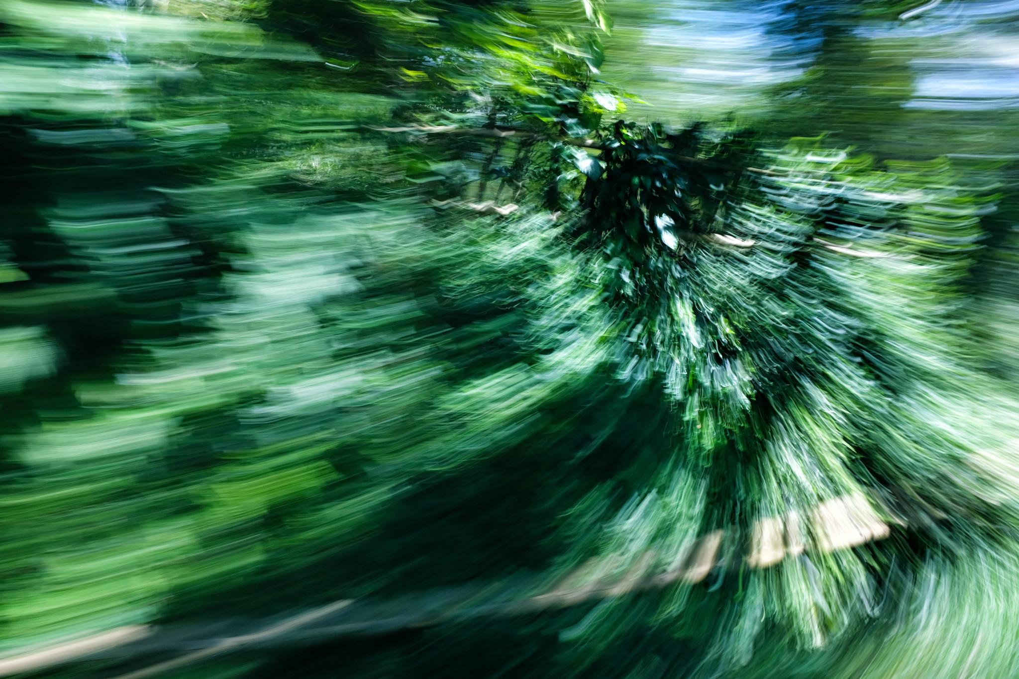 blur_trees