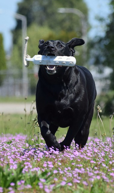 Fetching through flowers