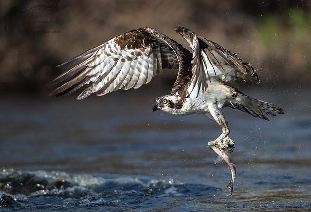 Osprey 5_7