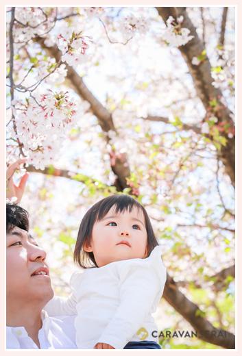 パパに抱っこしてもらって桜を眺める1歳の女の子