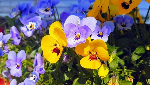 Vivid colours - as art - Golden Flowers