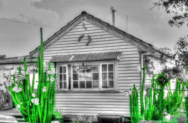Cactus House Cactus.