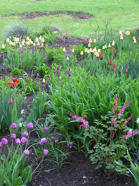 Perennials Bed with tulips in bloom