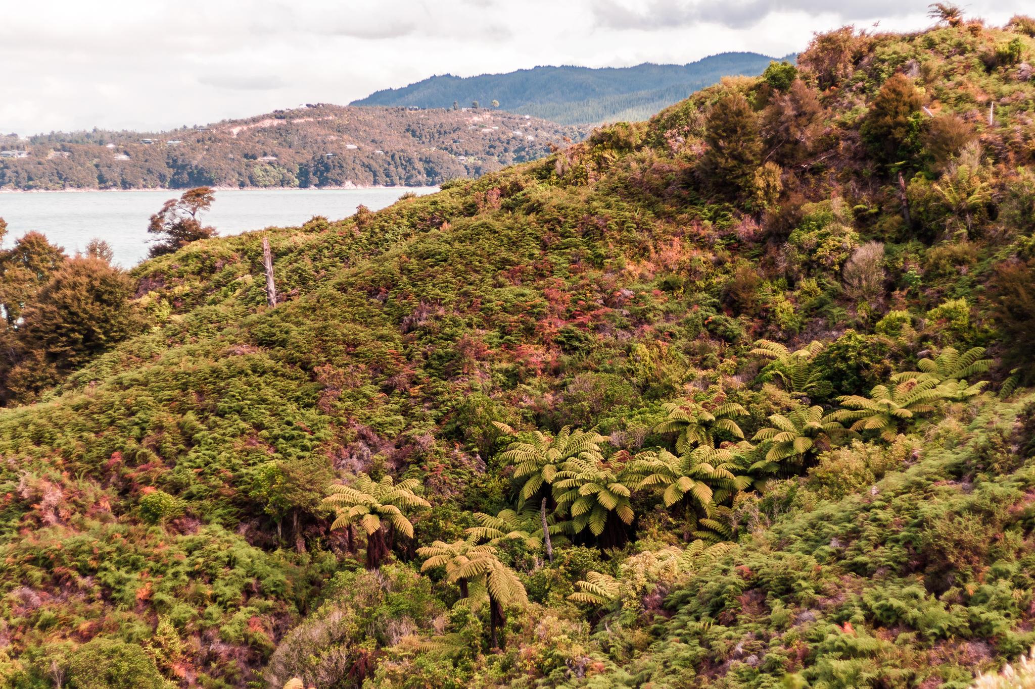 Abel Tasman national park-44