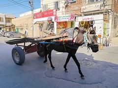 carro de caballo medio de transporte Tozeur Tunez 04
