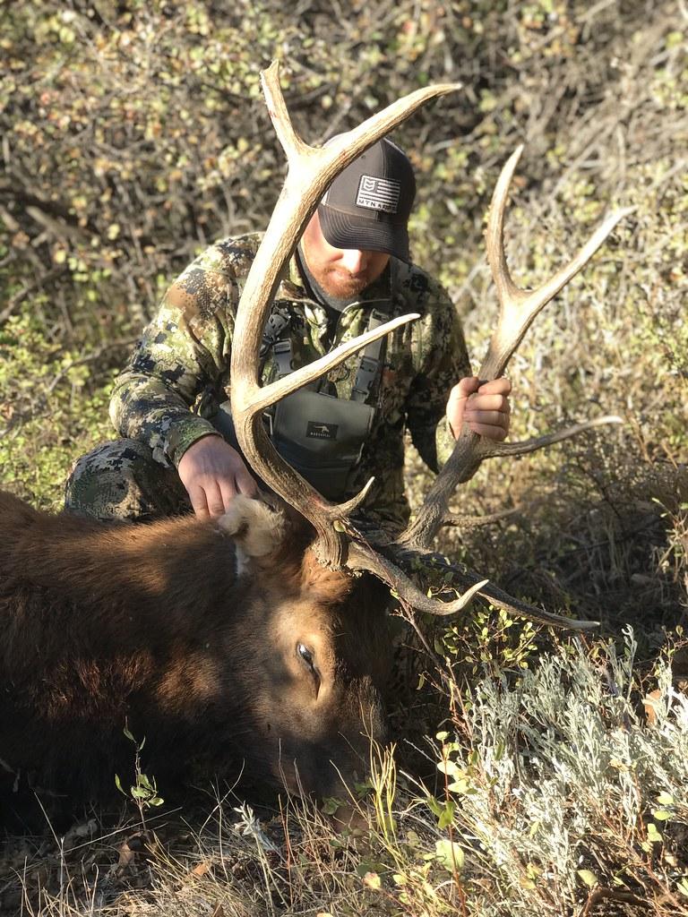 Colorado Elk Hunt and Mule Deer Hunt - Meeker - Antlers