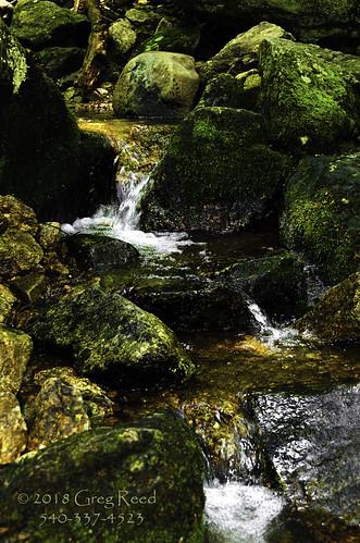 waterfalls moss fern viriginia wigwamfalls yankeehorseridge blueridgeparkway georgewashingtonjeffersonnationalforest nationalforest forest