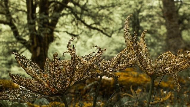 Flora en Andia3