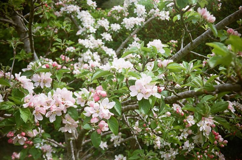Spring Bloom III