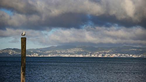 <p>Petone Wharf, Wellington</p>